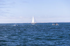 Odosobniony jachtu żeglowanie w błękitnym Atlantyckim oceanie blisko Monterey, Kalifornia Obraz Stock
