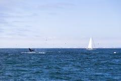 Odosobniony jachtu żeglowanie w błękitnym Atlantyckim oceanie blisko Monterey, Kalifornia Fotografia Stock
