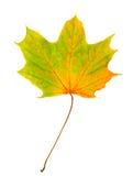 odosobniony jesień liść Obrazy Royalty Free