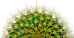odosobniony kaktusa biel Obrazy Royalty Free