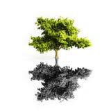 odosobniony klonowy drzewo Obrazy Royalty Free