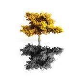 odosobniony klonowy drzewo Obrazy Stock