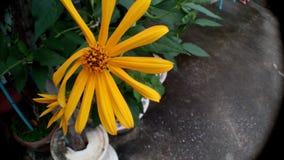 odosobniony kwiatu biel Obrazy Royalty Free