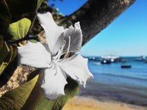 odosobniony kwiatu biel Zdjęcie Stock