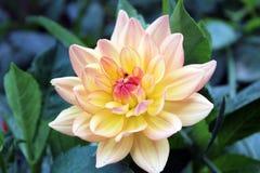 odosobniony kwiatu biel Fotografia Royalty Free