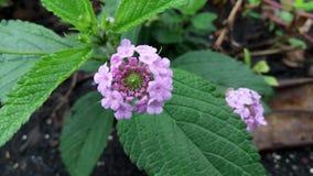 odosobniony kwiatu biel Obraz Stock