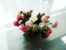 odosobniony kwiatu biel Zdjęcia Royalty Free