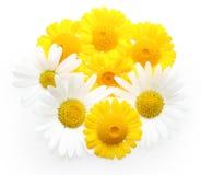 odosobniony kwiatu kolor żółty obraz royalty free