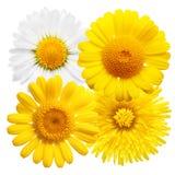 odosobniony kwiatu kolor żółty obrazy royalty free