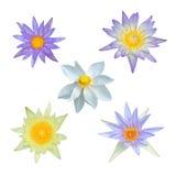 odosobniony kwiatu lotos Obraz Royalty Free