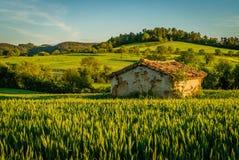 Odosobniony mały dom w pszenicznym polu Zdjęcie Royalty Free
