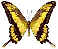 odosobniony motyla kolor żółty Obrazy Royalty Free