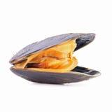 odosobniony mussel Obrazy Stock