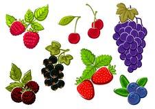 Odosobniony ogród i dzikie jagod owoc Fotografia Stock