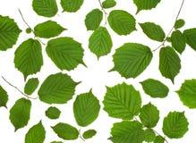 Odosobniony ornament zieleni liście Zdjęcia Royalty Free