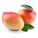 odosobniony owoc mango Fotografia Stock