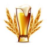 Odosobniony Pełny szkło świeży ale piwo, banatka i Wysokiej jakości ilustracja piankowaty lager piwo z piankowymi i jęczmiennymi  Zdjęcie Royalty Free