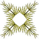 Odosobniony przedmiot: rama horsetail Bezszwowy wzór dla tkaniny, papier, tapeta Obraz Stock