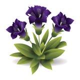 Odosobniony purpura kwiat, gloksynie wektor Obrazy Stock