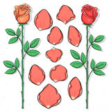 Odosobniony różany i płatki handmade w nakreśleniu projektujemy projekta kwiatu ilustracyjny nakreślenie twój Zdjęcie Stock
