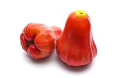 Odosobniony różany jabłko Obrazy Royalty Free