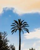 Odosobniony retro drzewko palmowe Obrazy Royalty Free