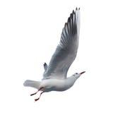 odosobniony seagull Zdjęcia Stock