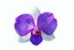 odosobniony storczykowy purpurowy biel Zdjęcie Stock
