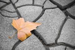 Odosobniony suchy liść na suchej ziemi Obraz Stock