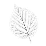 Odosobniony wektorowy monochromatyczny brzoza liść ilustracja wektor