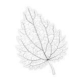 Odosobniony wektorowy monochromatyczny pokrzywowy liść ilustracji