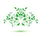 Odosobniony zielony liść na białym tle Obrazy Royalty Free