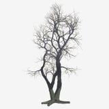 Odosobniony zimy drzewo Fotografia Stock