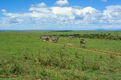 Odparowania Afryka i zebra Fotografia Royalty Free
