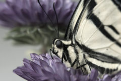 odpocząć motyla Obraz Royalty Free