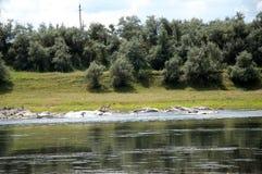 Odpoczynek na lato naturze Piękny lato natury krajobraz Zdjęcia Royalty Free