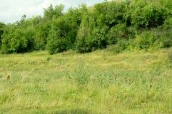 Odpoczynek na lato naturze Piękny lato natury krajobraz Jaskrawy jasny niebieskie niebo z bielem chmurnieje w lato naturze Fotografia Stock