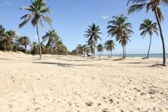 Odpoczynek, turystyka, podróż, ciepli kraje, Żółty piasek, kokosowe palmy, morze, niebieskie niebo, wakacje Obrazy Stock