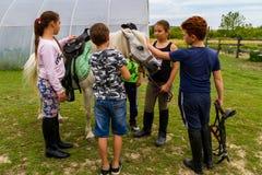 Odpoczynek w lat dzieci ` s equestrian obozie w Ukraina Fotografia Stock