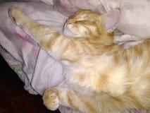 Odpoczynkowy kot który jest bezpłatny od zobowiązań, zdjęcia royalty free
