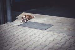 Odpoczynkowy pies na beton ziemi zdjęcie stock