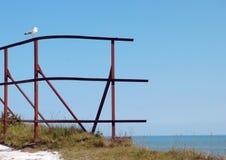 Odpoczynkowy seagull w Dover Zdjęcie Royalty Free