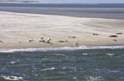 Odpoczywać foki między Terschelling i Ameland Zdjęcia Royalty Free