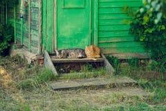 Odpoczywać relaksuje dwa zaciszność kota blisko drewnianego zielonego drzwi fotografia royalty free