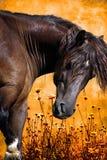odpowiada konia ilustracja wektor