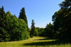 odpowiada lasów wzgórza drogi widok zdjęcie royalty free