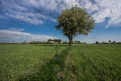 odpowiada osamotnionego drzewa obraz royalty free