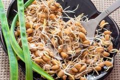Odrośnięta adra banatka, zdrowy jedzenie, umacniać odporność Zdjęcia Stock