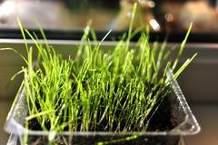 Odrośnięta trawa Obraz Royalty Free
