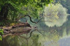 Odruch w jeziorze Obrazy Royalty Free